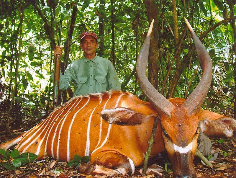Bongo hunting in Cameroon